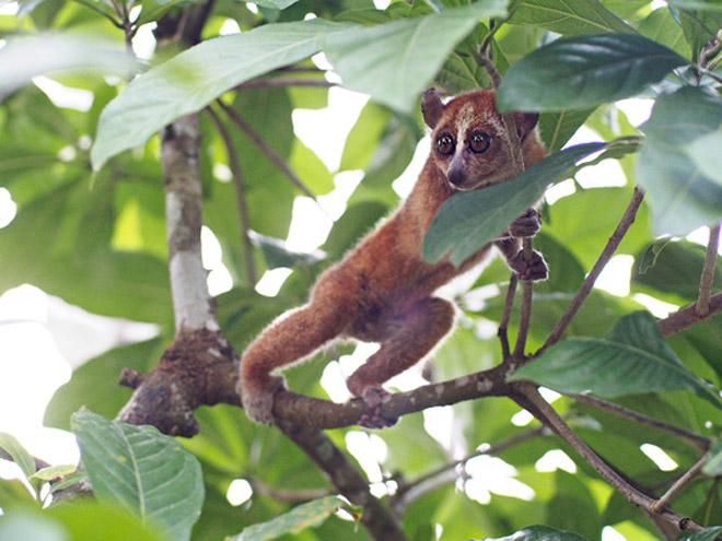 Kết quả hình ảnh cho vườn Quốc gia Cát Tiên