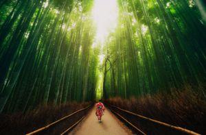 Ở Nhật Bản có một khu vườn chỉ cần lạc vào là bạn sẽ bị mê hoặc