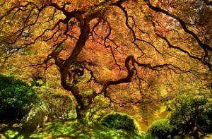 Bí ẩn những loài cây với hình thù kỳ lạ