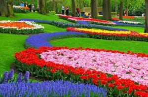 Thiên đường hoa Keukenhof diễm lệ 2017 - Lễ hội không thể bỏ lỡ