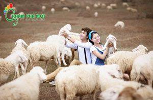 Đến Vũng Tàu trải nghiệm Nông trại Cừu, vườn rau