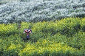Nhiếp ảnh gia Việt