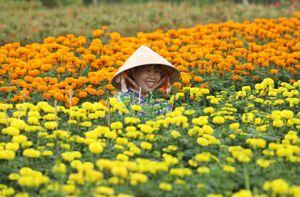 Làng hoa Sa Đéc rực rỡ đón xuân