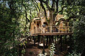 Ngắm ngôi nhà trên cây đẹp như mơ