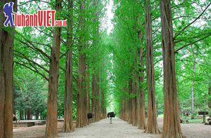 Tour Hàn Quốc 5 ngày giá rẻ cam kết 100% đậu visa