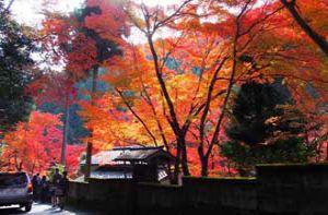 Bức tranh cuối thu Nhật Bản đẹp nao lòng