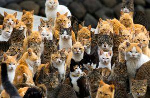 Thăm nơi mèo đông gấp 6 lần người ở Nhật Bản