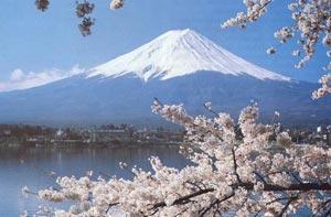 Đến Nhật Bản thưởng thức hoa anh đào